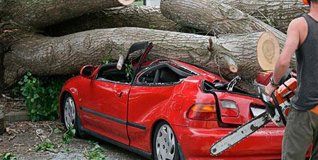 Если на ваш автомобиль упало дерево<