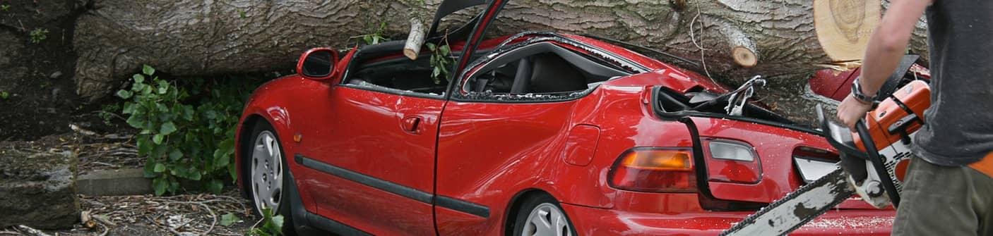 Если на ваш автомобиль упало дерево